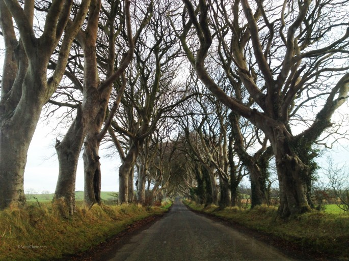 The Dark Hedges of Ballymoney