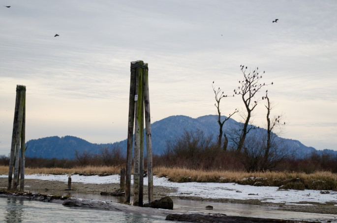 Eagle watching on the Harrison River