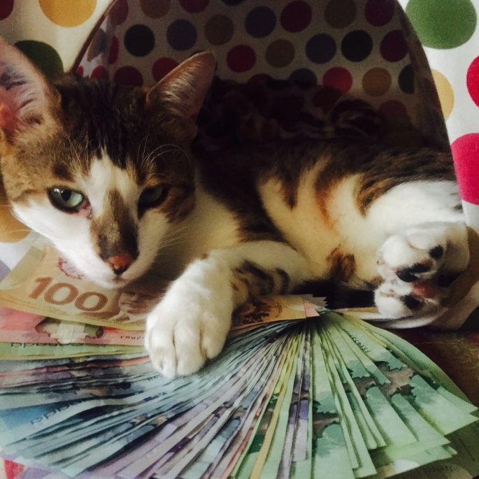 The cat - with all the money needed for his flight. I just wish Send My Bag would start sending cats.