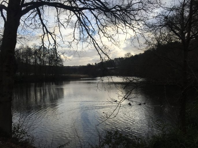 Days Out In Surrey: Winkworth Arboretum