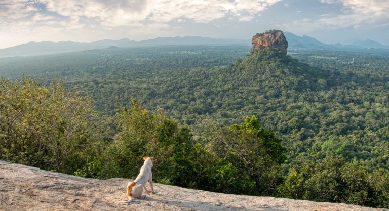 Pidurangala Rock At Sunrise: 5 Reasons To Choose It Over Sigiriya