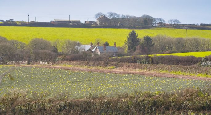 Cornwall's fields in winter with plenty of yellow colour