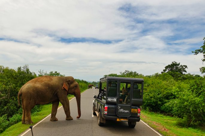 Elephant on the road in Yala Sri Lanka