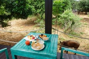 Hoppers on an outdoor breakfast table at Jetwing Safari Camp Yala Sri Lanka