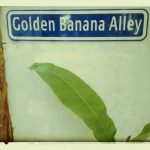 Golden Banana Alley